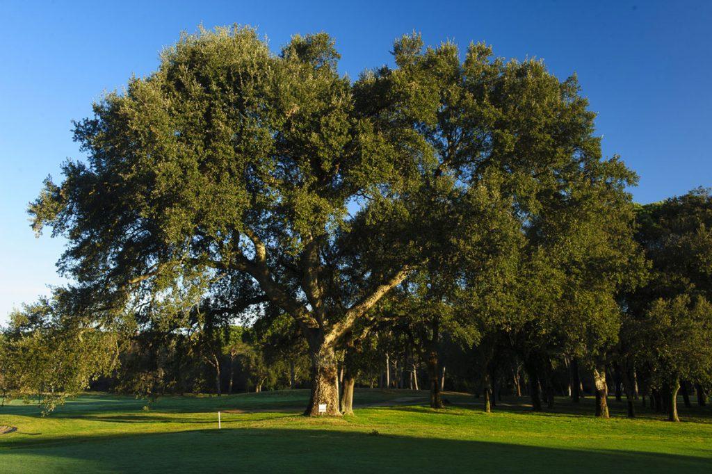 https://golftravelpeople.com/wp-content/uploads/2019/04/Club-de-Golf-Costa-Brava-14-1024x682.jpg