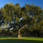https://golftravelpeople.com/wp-content/uploads/2019/04/Club-de-Golf-Costa-Brava-14-150x150.jpg