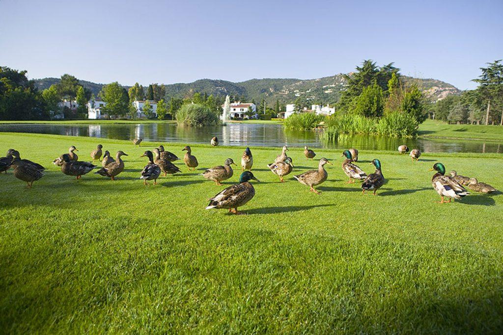 https://golftravelpeople.com/wp-content/uploads/2019/04/Club-de-Golf-Costa-Brava-17-1024x683.jpg