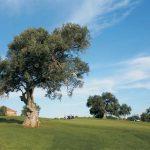 https://golftravelpeople.com/wp-content/uploads/2019/04/Pestana-Silves-Golf-Club-4-150x150.jpg