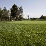 https://golftravelpeople.com/wp-content/uploads/2019/04/Real-Club-Pineda-Golf-Seville-3-150x150.jpg