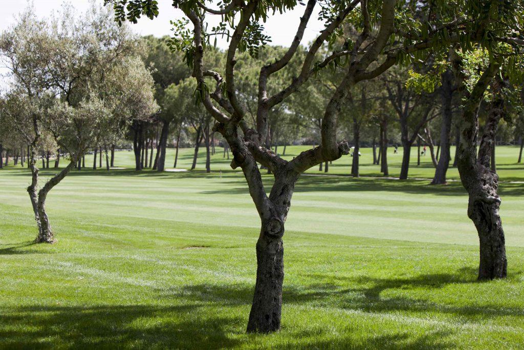 https://golftravelpeople.com/wp-content/uploads/2019/04/Real-Club-Pineda-Golf-Seville-6-1024x683.jpg