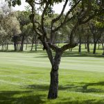 https://golftravelpeople.com/wp-content/uploads/2019/04/Real-Club-Pineda-Golf-Seville-6-150x150.jpg
