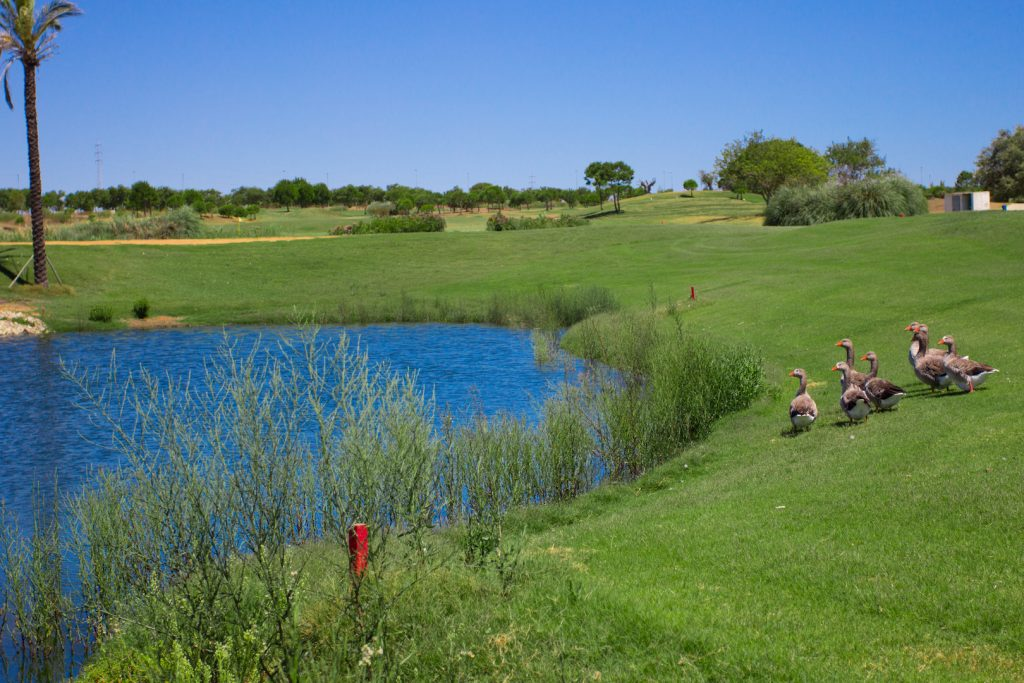 https://golftravelpeople.com/wp-content/uploads/2019/04/Villa-Nueva-Golf-Club-5-1024x683.jpg