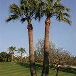 https://golftravelpeople.com/wp-content/uploads/2019/05/Real-Club-de-Golf-Guadalmina-24-150x150.jpg