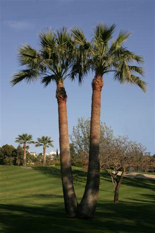 https://golftravelpeople.com/wp-content/uploads/2019/05/Real-Club-de-Golf-Guadalmina-24.jpg
